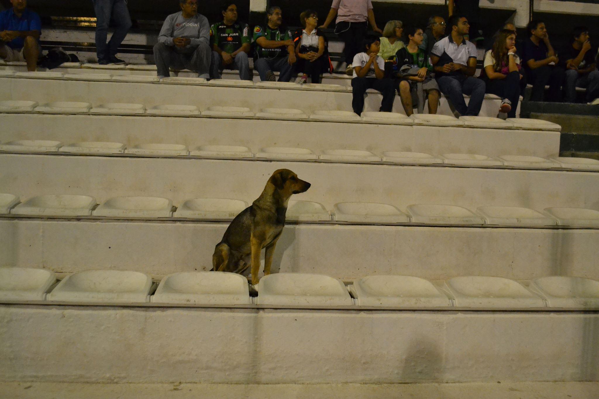 perro en la tribuna