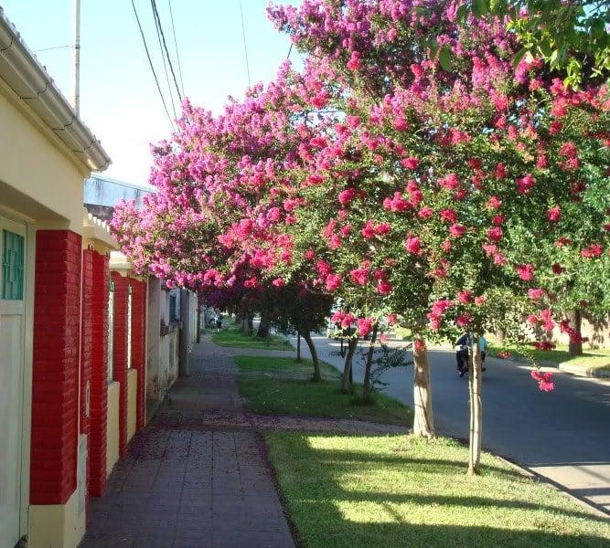 Quer s un rbol en tu vereda 39 39 que pasa zona norte for Arboles de hojas perennes para veredas