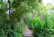 Reserva de San Isidro ribera norte
