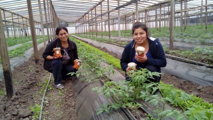 productores-verduras-pueblo-a-pueblo