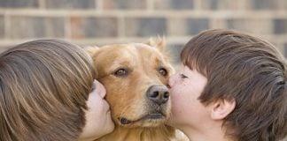 festival-adopcion-perro-san-isidro