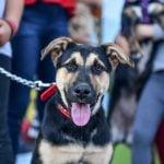 festival-mascotas-el-cazador-escobar