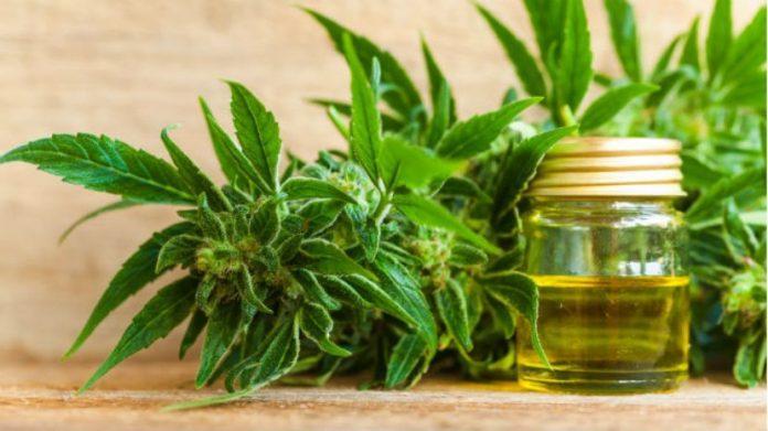 charla-cannabis-medicinal-escobar