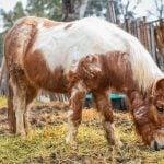 Pony Granja Don Benito