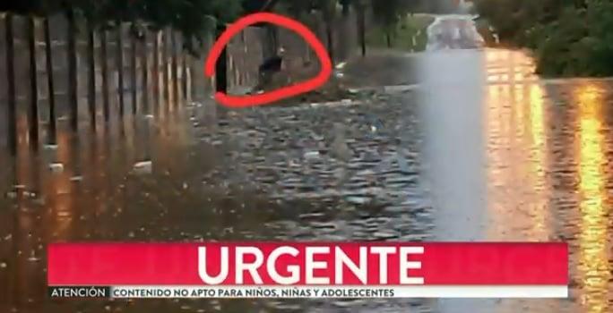 Busqueda Remisero Benavidez Tigre Tormeta
