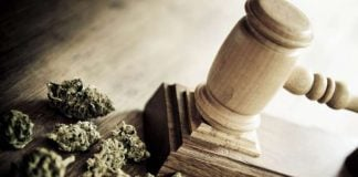 Justicia Cannabis