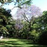 Museo Pueyrredon Jardines