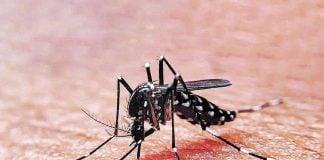 Dengue Zona Norte