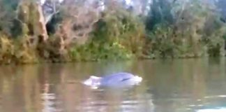 1 Delfin Avistado Delta
