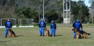 División Canina (2)