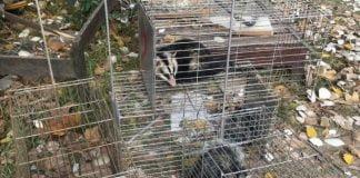 Caza Ilegal Animales Silvestres Estancias Pilar
