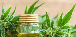Cannabis Medicinal Tigre 6