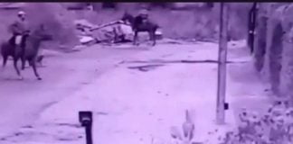 Robo Caballo Pilar 3