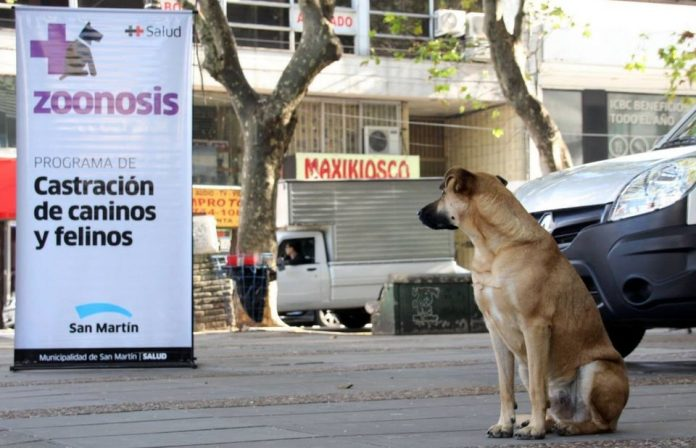 Zoonosis San Martin