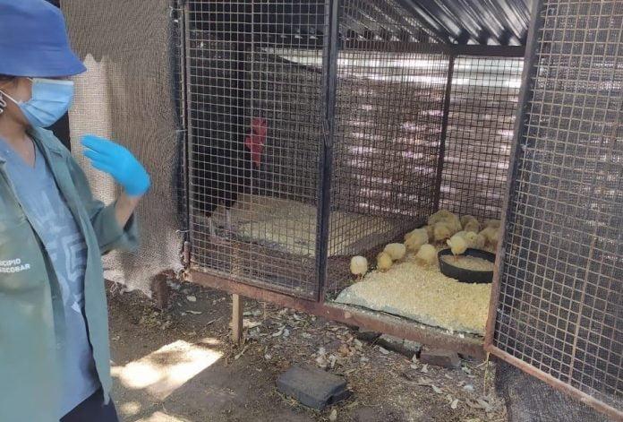 Aves Recuperadas 2 (1)