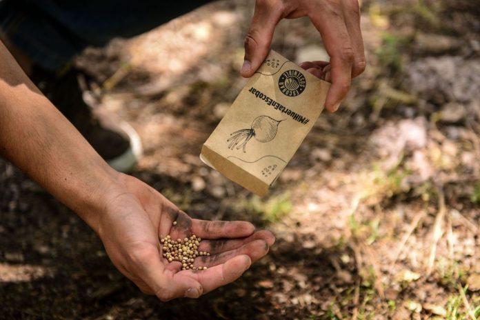 kit semillas escobar