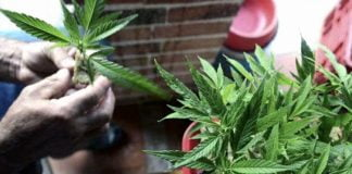 cannabis medicinal provincia proyecto