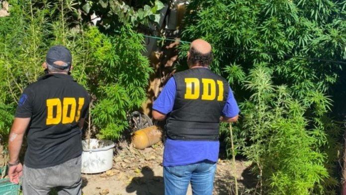 plantacion marihuana tigre detenidos