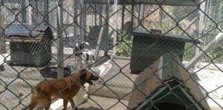 refugios perros base aérea el palomar