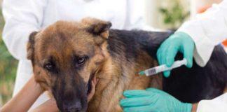 vacunación antirrábica perros gatos vicente lópez