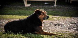 castración gratuita mascotas tres de febrero