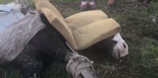 caballo muerto maltrato animal hurlingham