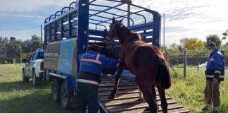 caballos rescate