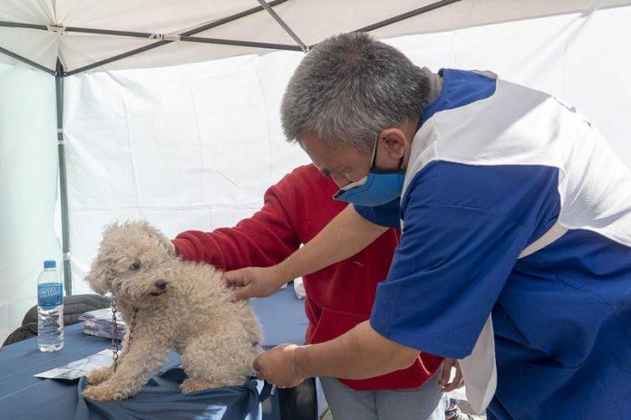 vacunación mascotas san isidro