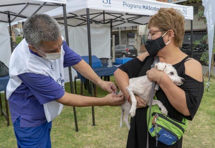 perro vacunacion zoonosis
