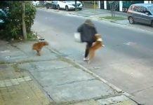 ataque perros san martin