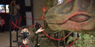 dinosaurio malvinas
